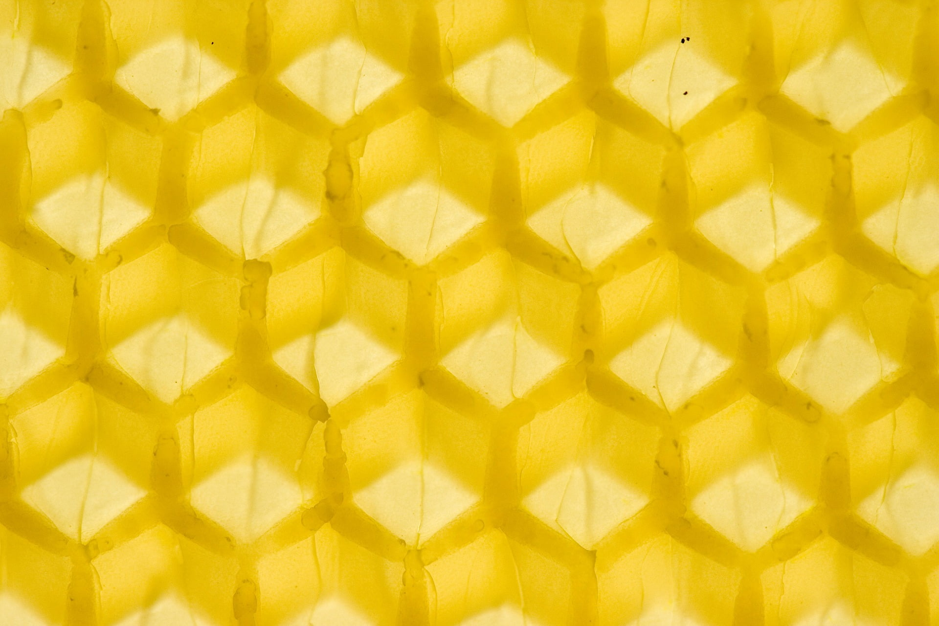 The Best Beeswax for Wax Wraps
