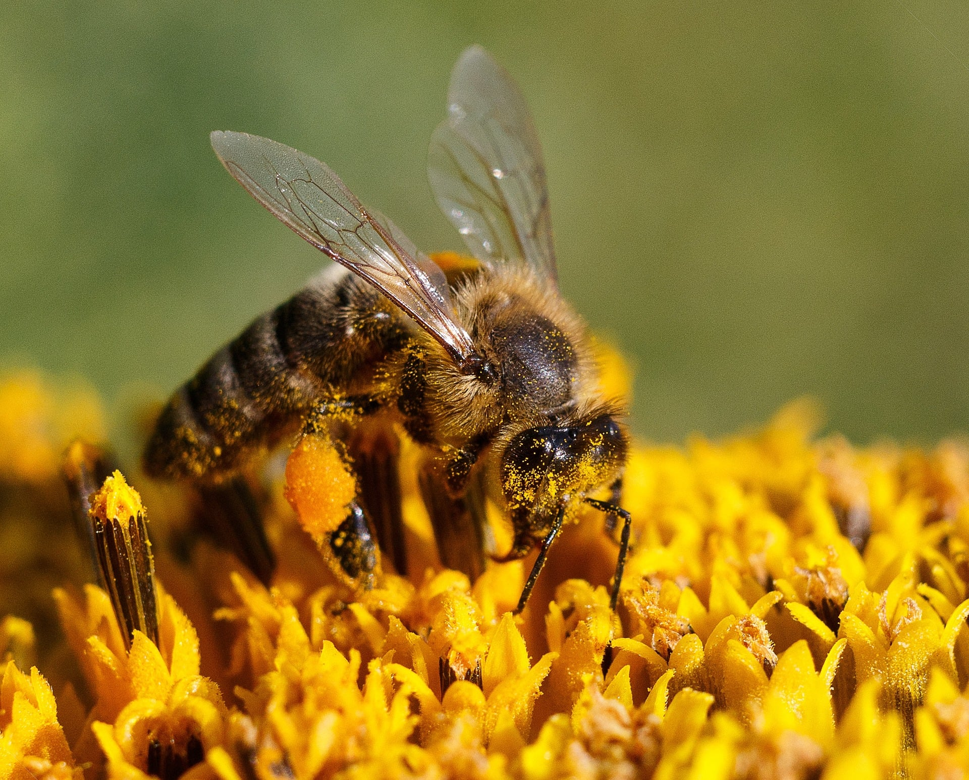 The Importance of Honeybees: How to keep our bees buzzing!